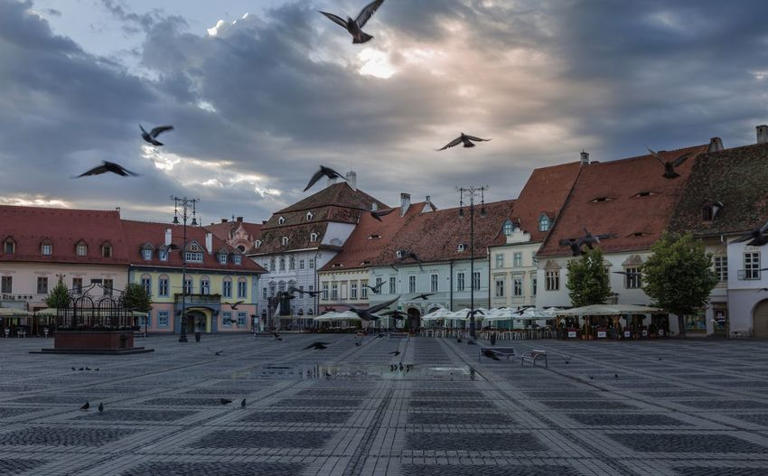 Piazza of old town Sibiu Romania Sibiu, Romania Sunrise Travel Destinations Pigeon Building Exterior Architecture Built Structure Vertebrate Animal Sky Animal Themes Bird Cloud - Sky City Flying Animal Wildlife Building Group Of Animals Street Town Large Group Of Animals