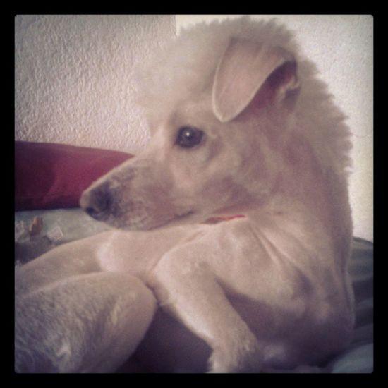 Mi perro con Mullet :p