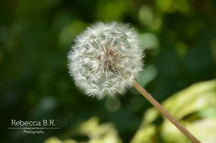 Hope White flower