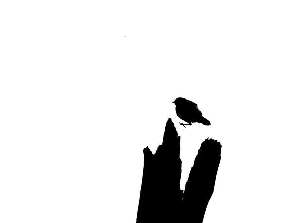 Bird Animals In The Wild Animal Wildlife Nature Sky Close-up Jumping Black And White Blackandwhite Photography Silhouette One Animal No People Outdoors Day Tree Trunk Logo Logo Design Logos Funny Creativity Creative Creative Photography Discover Berlin