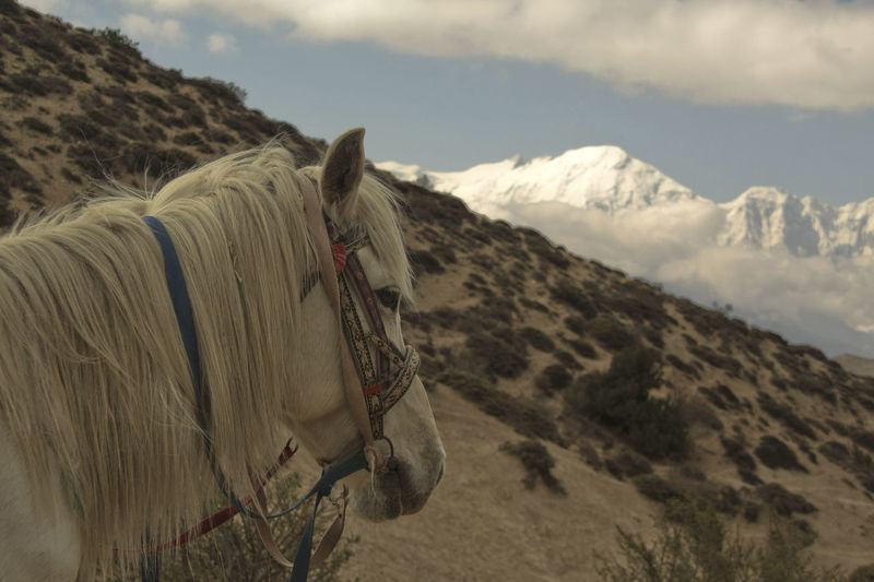 Horse On Mountains Against Sky