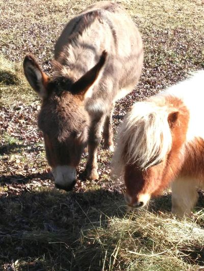 Enjoying Life Horse Love Mini Horse Nature Donkey