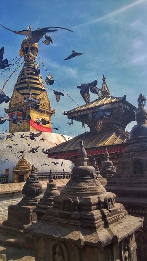 World Heritage Site Swayambhunath Monkey Temple Kathmandu Flying Pegions Blue Sky Got Lucky Capture The Moment PhonePhotography EyeEm Nature Lover EyeEmNewHere EyeEm Selects