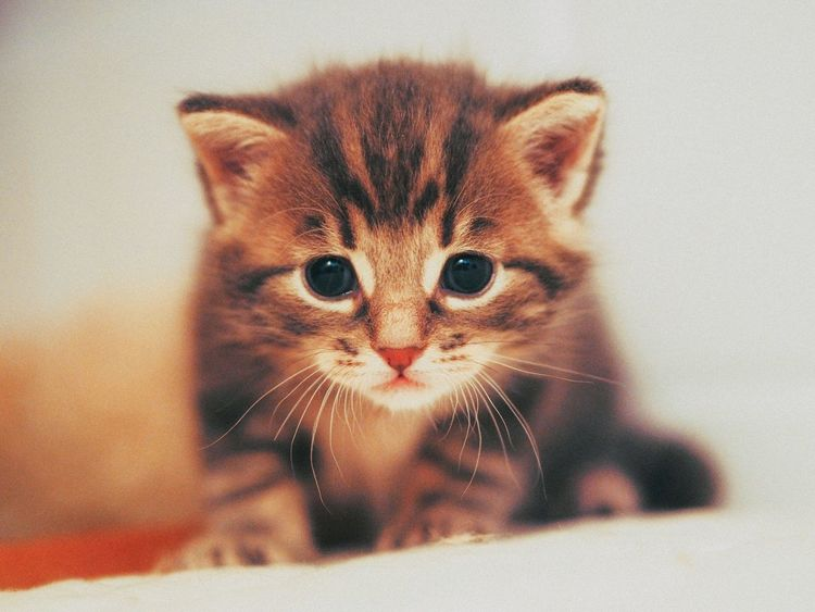 Kitten Cute Pets Cat Little Pet Domestic Animals EyeEm Nature Lover EyeEm Best Shots Sweet Hello World Happiness Cats Of EyeEm Real Life From My Point Of View Whisker Close-up Focus On Foreground Selective Focus My Year My View