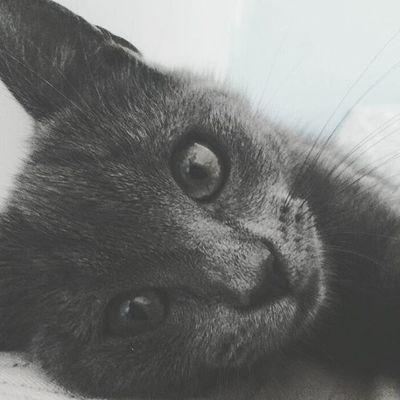 No hay nada más inocente que una mirada que sobrevive de una boca censurada 🐈 Catselfies Catpeople Catthings Blackandwhite Grayscale Photography Catportrait Glance Pets