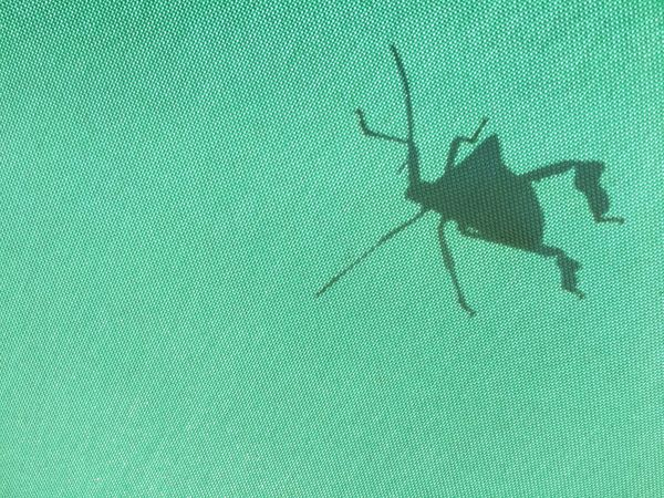 Green Color Insect One Animal Animal Themes No People Close-up Outdoors Day Shape Shadow Light And Shadow Shapes In Nature  Fabric Textured  Nature Bug Perspectives On Nature