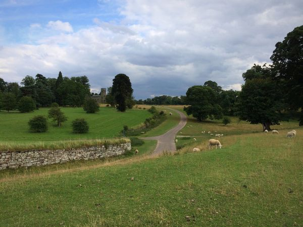 Tree Grass Sky Field Nature Cloud - Sky Day Green Color Animal Themes Landscape Scenics Growth Tranquil Scene Beauty In Nature Tranquility No People Outdoors Livestock Mammal Beautiful Location 💕 National Trust 🇬🇧 Calke Abbey Church Sheep🐑