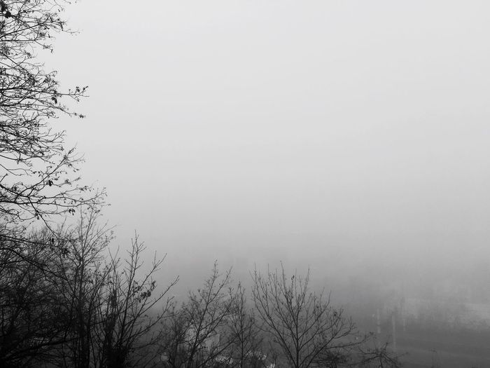 Tree Nature Beauty In Nature Tranquility Tranquil Scene Scenics Fog No People Outdoors Low Angle View Sky Hazy  Day France Lyon