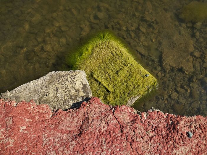 High angle view of moss on rock against wall