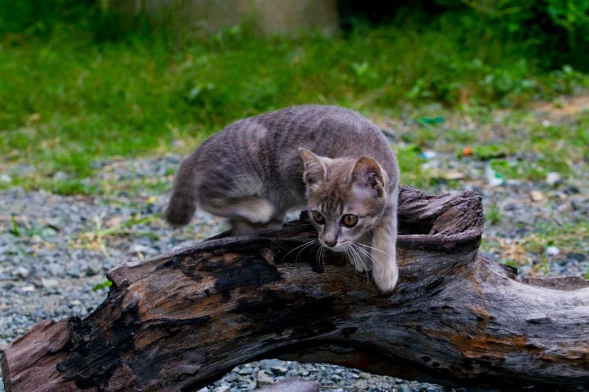 Cute little cat Animal Themes Animal One Animal Mammal Vertebrate Focus On Foreground Animal Wildlife Nature