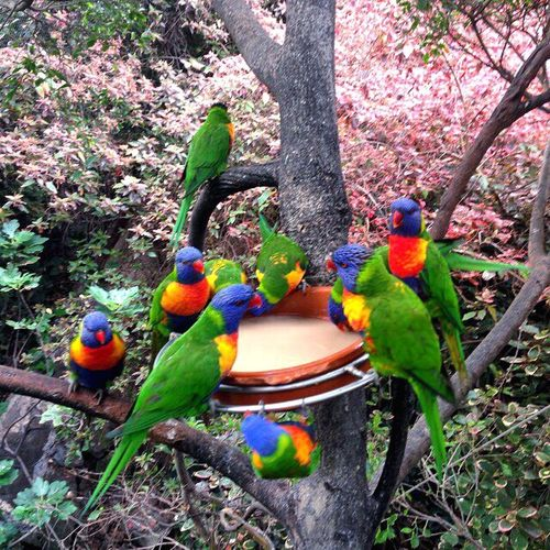 Bird Tree Animal Themes Parrot Tree Trunk Multi Colored Animals In The Wild Nature Day Outdoors No People Beauty In Nature