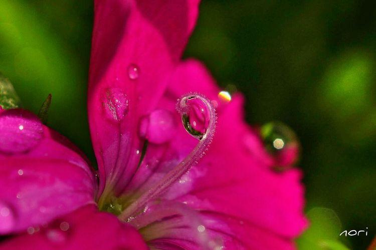 クルクルっと🌀光を捕まえた✨もうひと頑張りしてきます(^-^ゞ Raindrops EyeEm Nature Lover EyeEm Flower Flower Flowers Nature_collection *CHIE* Kagoshima