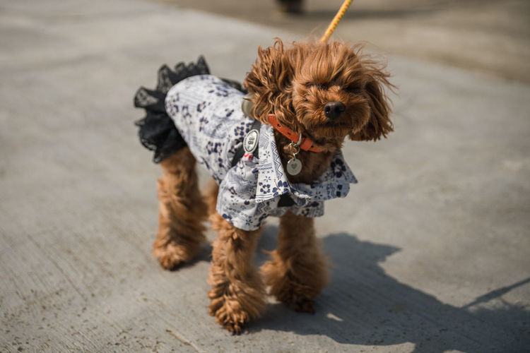 A fashionable