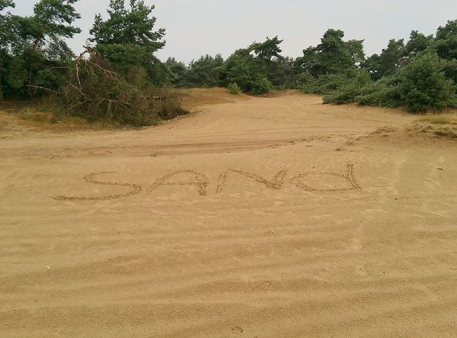 Nature Wanderlust Sand Sand Dunes Forest Outdoor Photography Exploring Wet Sand Structure And Nature Weert/ Netherlands