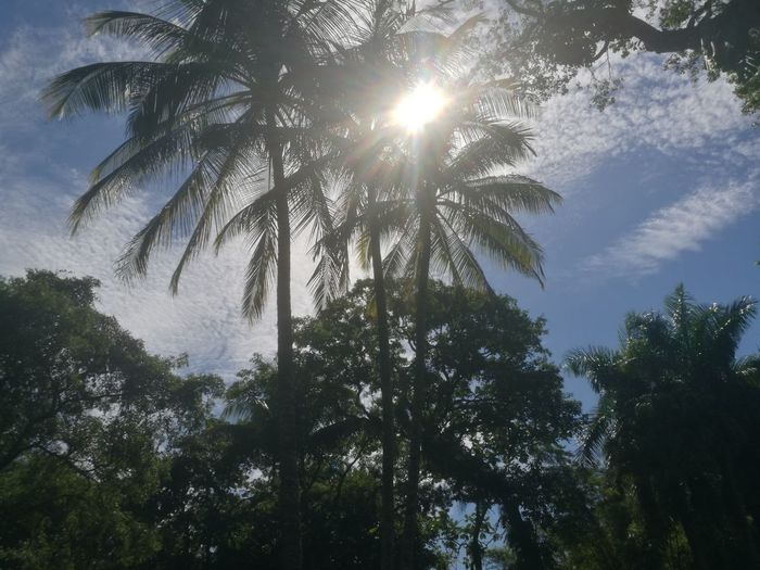 Nature Sky Outdoors Beauty In Nature Sunlight Low Angle View Palm Tree Power In Nature