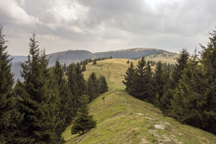 landscape Donovaly Slovakia Velka Fatra Beauty In Nature Cloud - Sky Coniferous Tree Day Environment Forest Green Green Color Growth Land Landscape Mountain Nature No People Non-urban Scene Outdoors Pine Tree Plant Scenics - Nature Sky Tranquil Scene Tranquility Tree Zvolen