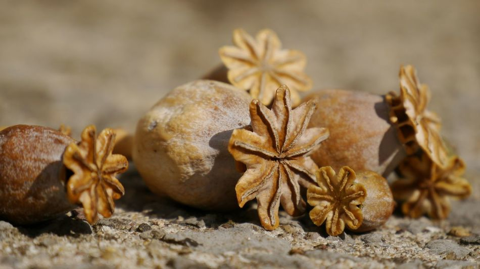 Past and future Flowers Nature Structure And Nature Eyem Gallery Structure Stone Material Warm Light EyeEm Gallery Dry Flower  PoppySeed Poppy Capsules Selective Focus Cropped