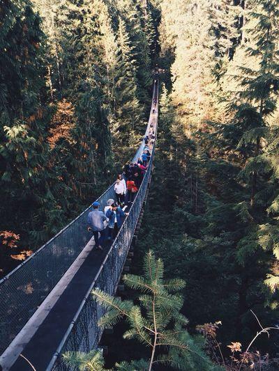 Vancouver, Canada. Capilano Capilano Suspension Bridge Vancouver Canada Canada Coast To Coast Travel Suspension Bridge Bridge Heights Trees People