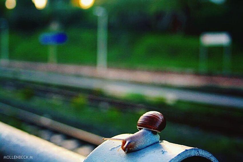 Aspettando il treno Santa Marinella Italy