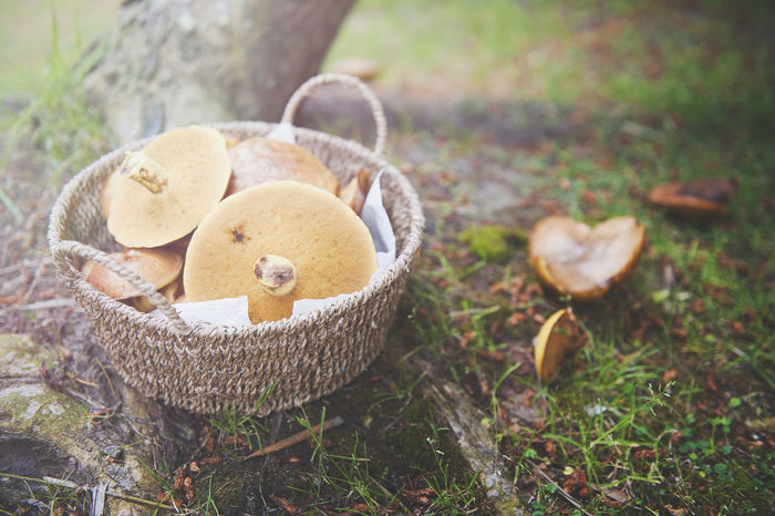 outdoor shooting EyeEmNewHere Basket Close-up Day Freshness Grass Mushroom Nature No People Outdoors Stuffed Toy Teddy Bear