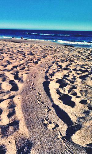 Hanging Out Relaxing Beach Water Seagulls Birds Footprints Waves