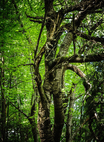 Beauty In Nature Branch Forest Green Color Growth Lush Foliage Nature No People Outdoors Tranquil Scene Tree Vitosha Mountain Sofia, Bulgaria Ent