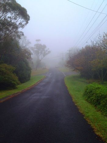 Misty Morning Wentworth Blue Mountains