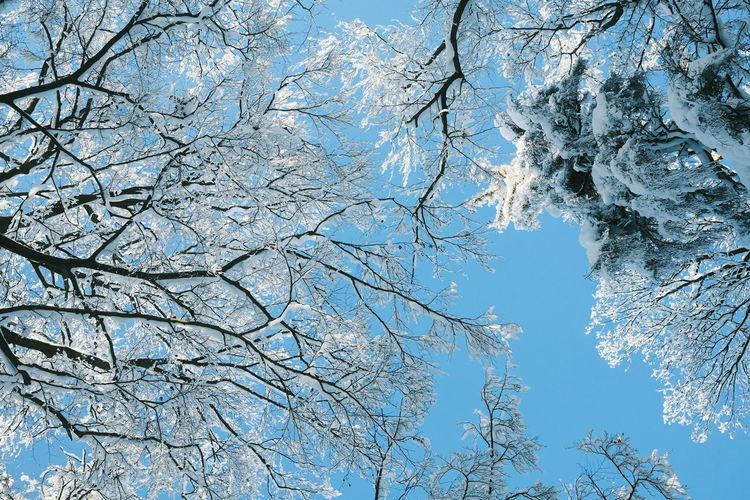 Low angle view of frozen bare tree against clear blue sky