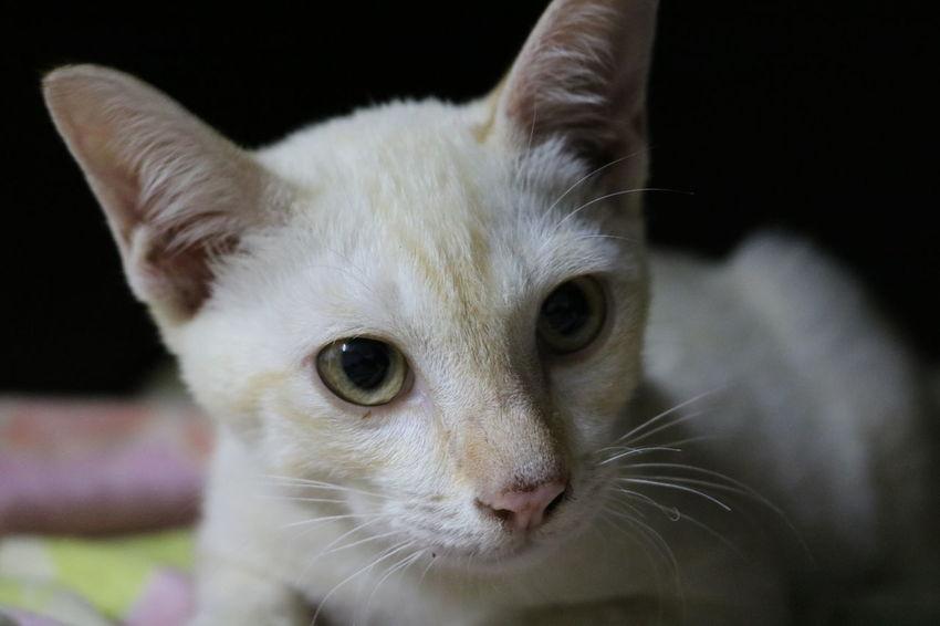 Cat Lovers Babycat🐱 Skin Care Cat Babycat Portrait Pets Outdoors Sleeping Cat