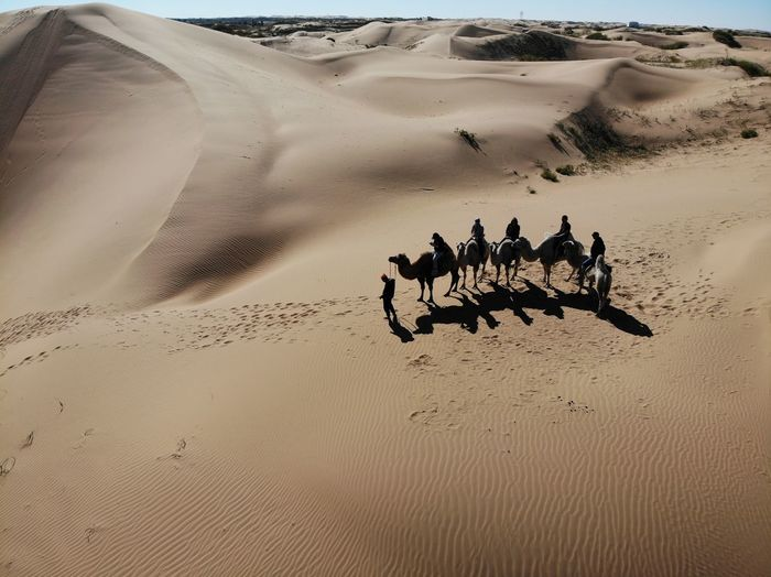 High angle view of people riding on camels at desert during sunny day