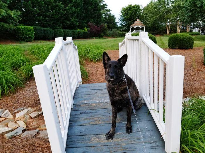 Portrait of dog in yard