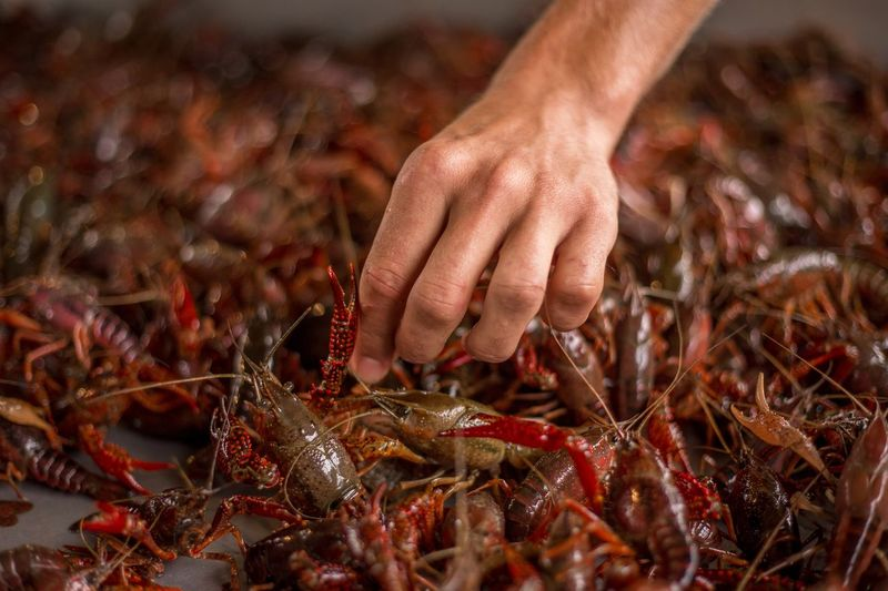 Crawfish Farm Mudbug Crawfish Boil  Hand Human Hand Human Body Part Food Food And Drink One Person Seafood Freshness Close-up Outdoors