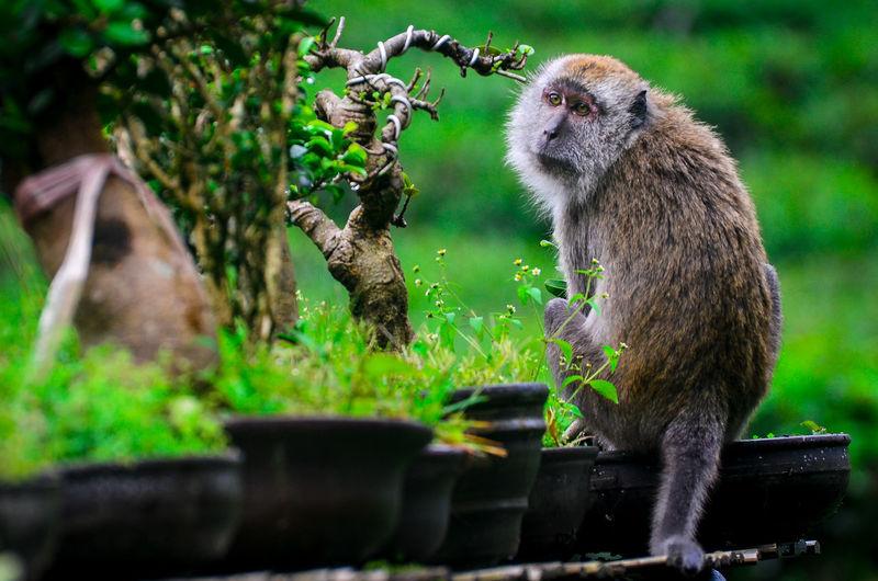 A monkey's sad