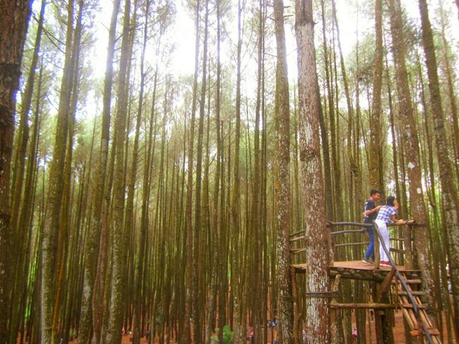 Forest Pinus Mangunan Nature Taking Photos People Adult Full Length Eco Tourism Outdoors First Eyem Photo Adventure Day Adapted To The City Beauty In Nature Vacations Yogyakarta,indonesia