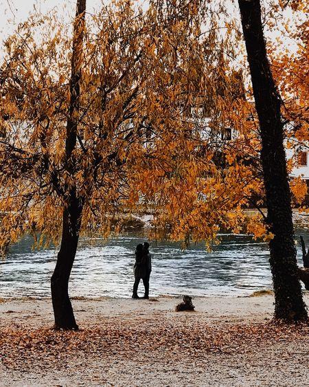 Tree Autumn Two