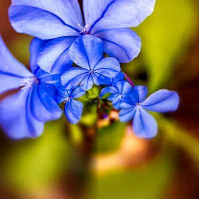 3XSPUnity EyeEm Best Shots Enjoying Life EyeEmNewHere Flowering Plant Flower Fragility Vulnerability  Plant Beauty In Nature Freshness Focus On Foreground Inflorescence Growth Close-up Flower Head Blue Selective Focus Petal Purple Outdoors Day Nature No People