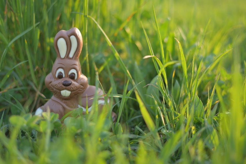 Chocolate Easter Bunny in a Meadow Plant Grass Green Color Nature Selective Focus Field Land Growth Toy Day No People Representation Easter Outdoors Easter Bunny Animal Art And Craft Figurine  Food Freshness Religion And Tradition Grass Area Meadow Chocolate Sweet Food EyeEm Nature Lover Nikon Bunny  Naturelovers