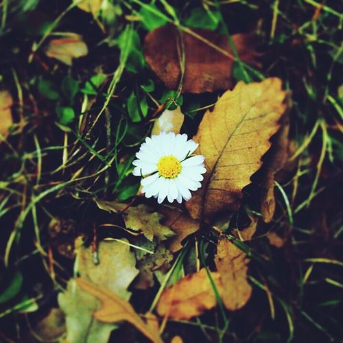 Life First Eyeem Photo Popular Photos Flowers