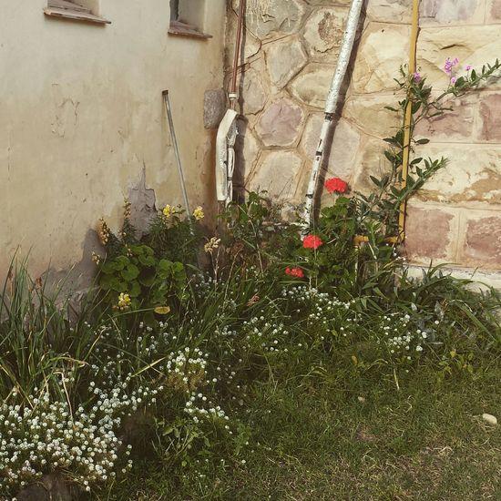 Plants growing in backyard