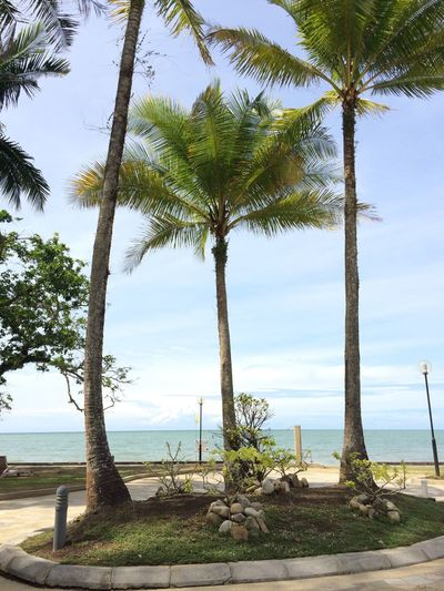 THREE Wallpaper Vacations Peace Borneo Sarawak Peaceful Travel Destinations Nature Lover Nature Landscape Plant Water Tree Sky Sea Nature Beauty In Nature Tranquil Scene Tranquility Land Horizon Over Water Scenics - Nature Beach Day Growth Horizon No People Tree Trunk Trunk Outdoors