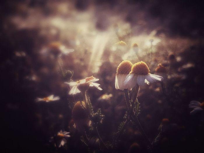 Close-up of mushrooms growing at night