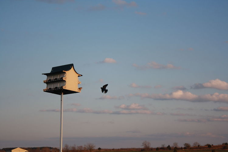 Nature Sky And Clouds Actionshot Animal Animal Themes Animal Wildlife Animals In The Wild Beauty In Nature Bird Birdhouse Birds Cloud - Sky Flying Group Of Animals Inflight Lighting Equipment Low Angle View Nature No People Outdoors Scenics - Nature Silhouette Sky Sunset Vertebrate