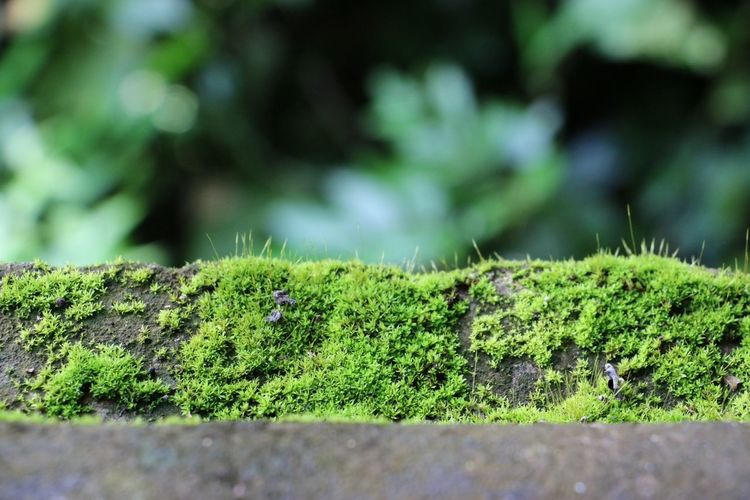 A green world I created.?