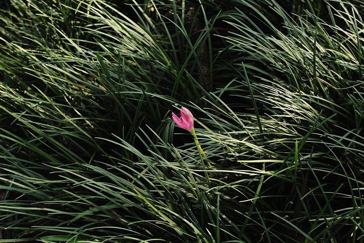 Alone flower Flower Photo Fotografia Photography Eyemphotography EyeEm Fotografi Beauty In Nature Nature Grass Street Art Culture Art