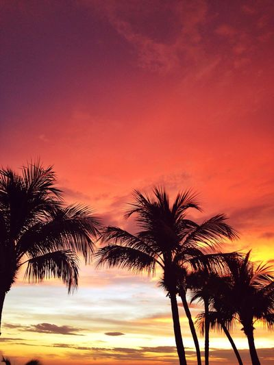 Sunset Pink Sky Palm Trees EyeEm Nature Lover Nature Photography Summer Florida Fort Myers United States