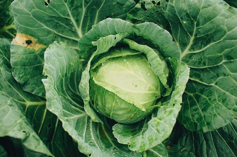 Full frame shot of cabbage