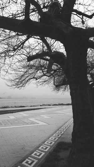 EyeEm Best Shots Hugging A Tree OpenEdit Monochrome Bwn Blackandwhite Hello World B&w Nature Street Photography Popular Photos