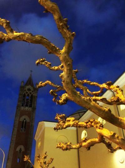 Life Tree Sky