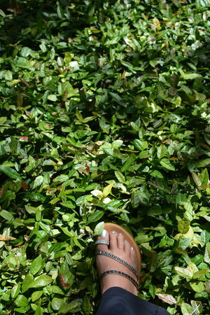 stepping amid the green Green Color One Person Human Body Part Footwear Personal Perspective Lifestyles Growth Shoe Nature Real People Outdoors Foot Footselfie Foliage Bling Sparkle Female Ground CoverSilver Color Rhinestones Sandals Fashion Green Leaves Groundcover Personal Style