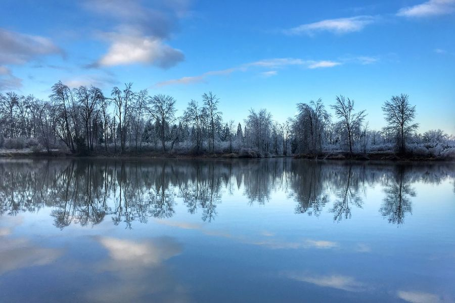 Oregon Reflection Water Nature Sky Tranquility Tranquil Scene Lake Scenics Beauty In Nature No People Outdoors Waterfront Idyllic Cloud - Sky Reflection Lake Day Trees WillametteValley Lane County Winter The Great Outdoors - 2017 EyeEm Awards No People Lake In Winter